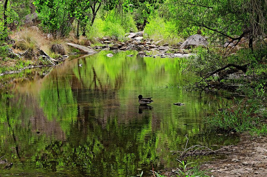Sabino Reflection H52 Photograph