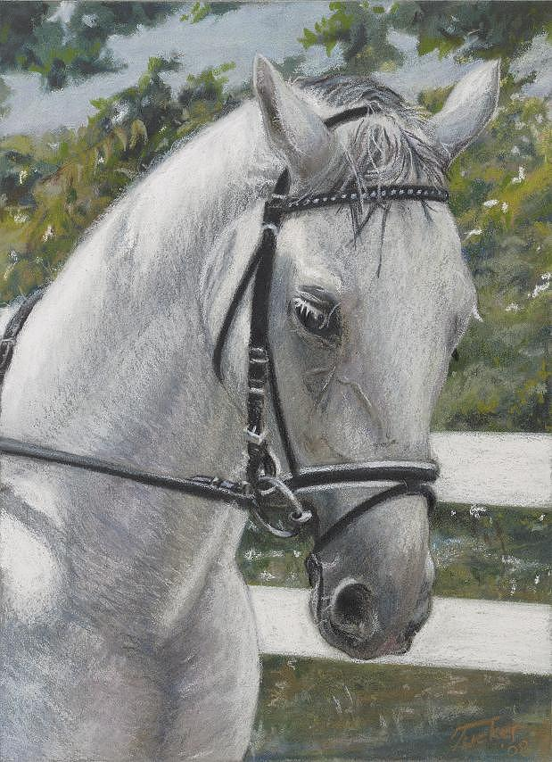 Horse Painting - Sabre by Andrew Tucker