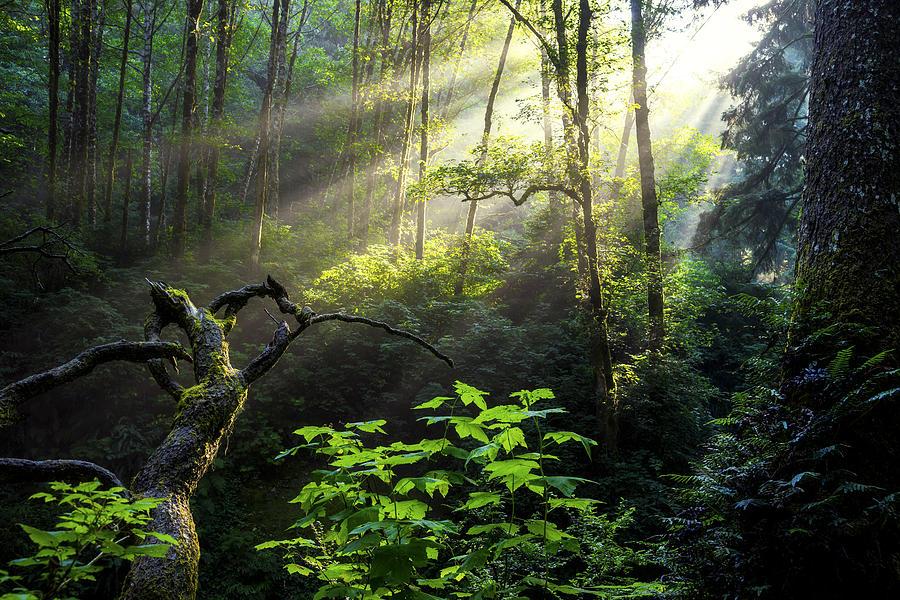 Light Photograph - Sacred Light by Chad Dutson