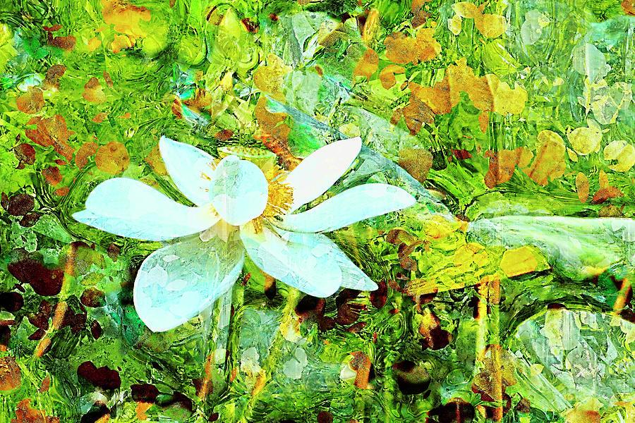 Sacred Lotus Painted Art Series Photograph