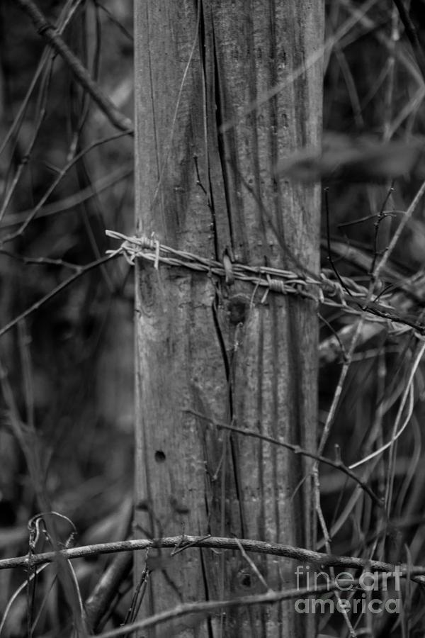 Wood Photograph - Sacred by Michael Rados