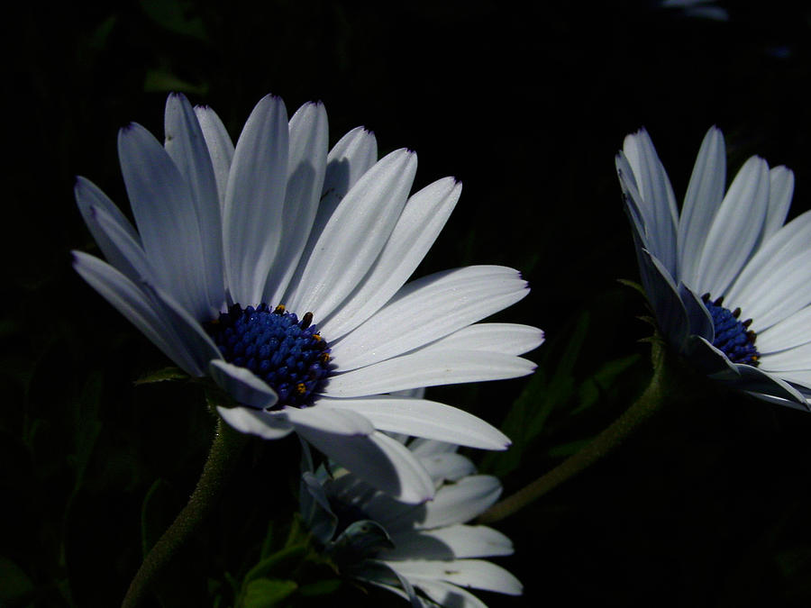 Blue Photograph - Sadness And Yearning by Edan Chapman