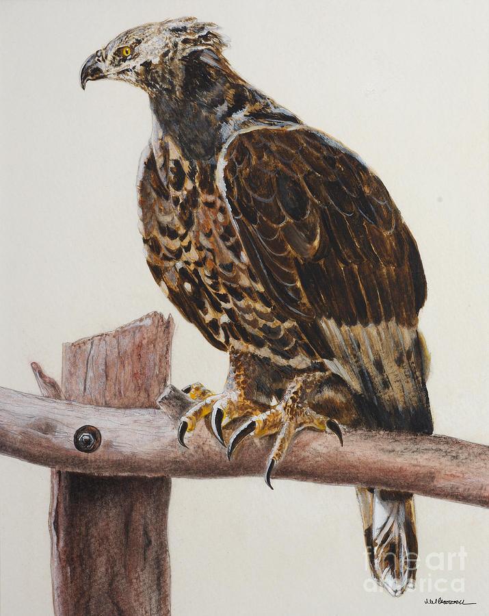 Hawk Painting - Safari Hawk by Monica Carrell
