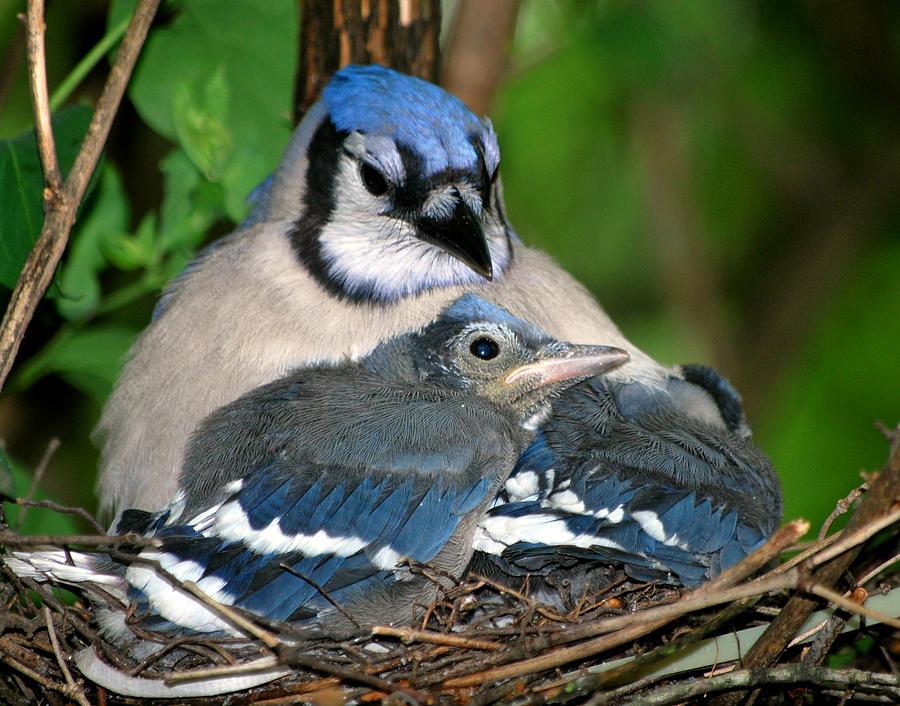 Bird Photograph - Safe Cover by Rose Pasquarelli