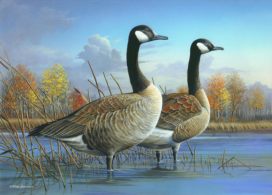 Canada Goose Painting - Safe from Harm by Mike Brown