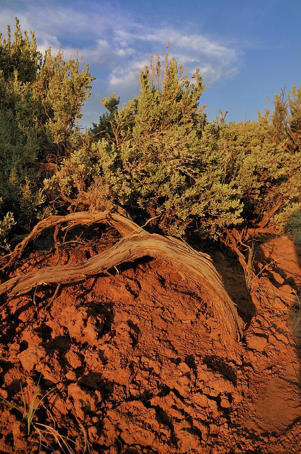 Landscape Photograph - Sagebrush At Sunset by Ron Cline