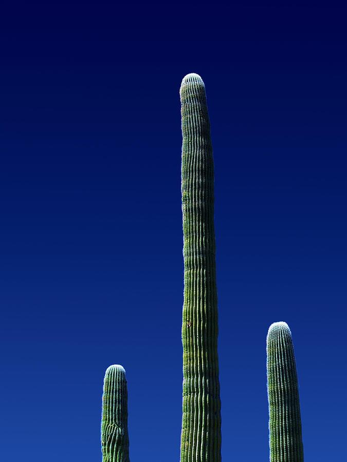 Nature Photograph - Saguaro 1.1 by Patrick OBrien
