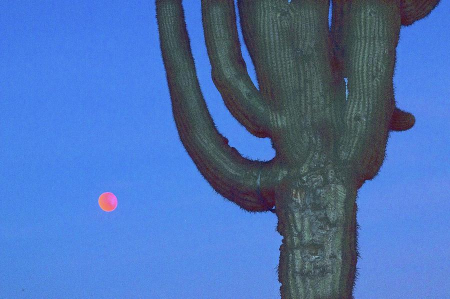 Saguaro And Eclipse IIi Digital Art