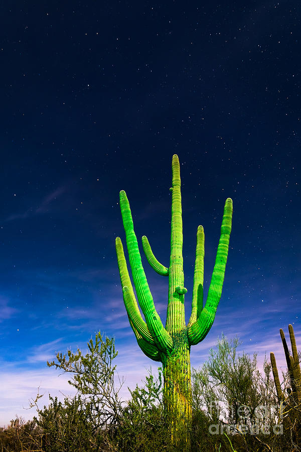 Saguaro Cactus Against Star Filled Sky by Bryan Mullennix