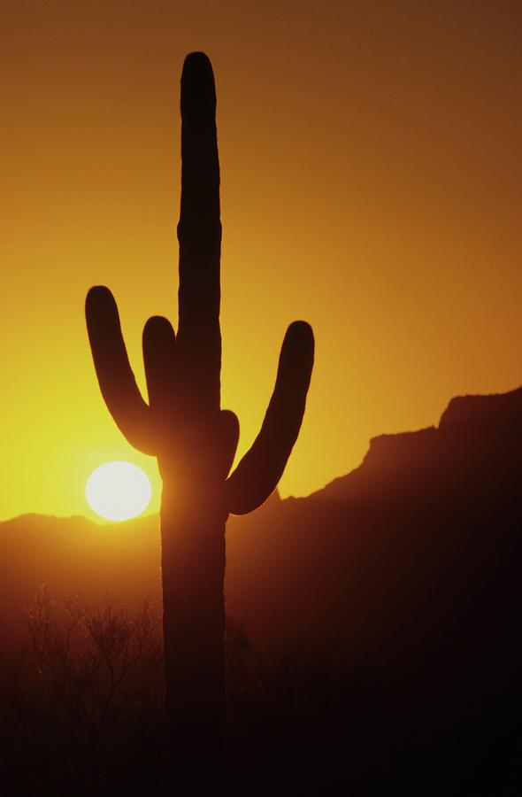 Arizona Photograph - Saguaro Cactus And Sunset by Don Kreuter
