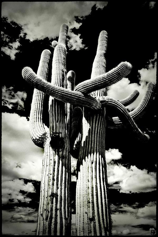 Saguaro Embrace by Roger Passman