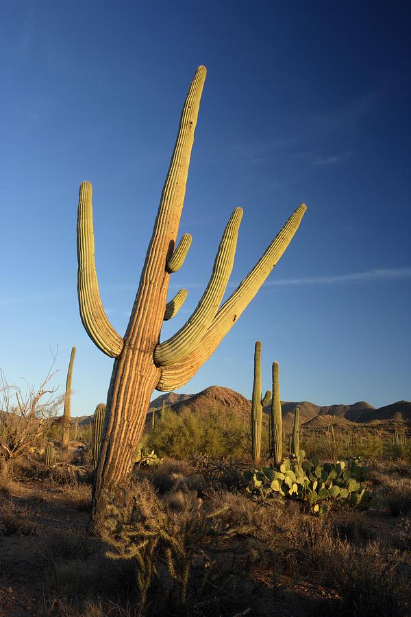 Arizona Photograph - Saguaro by Eric Foltz