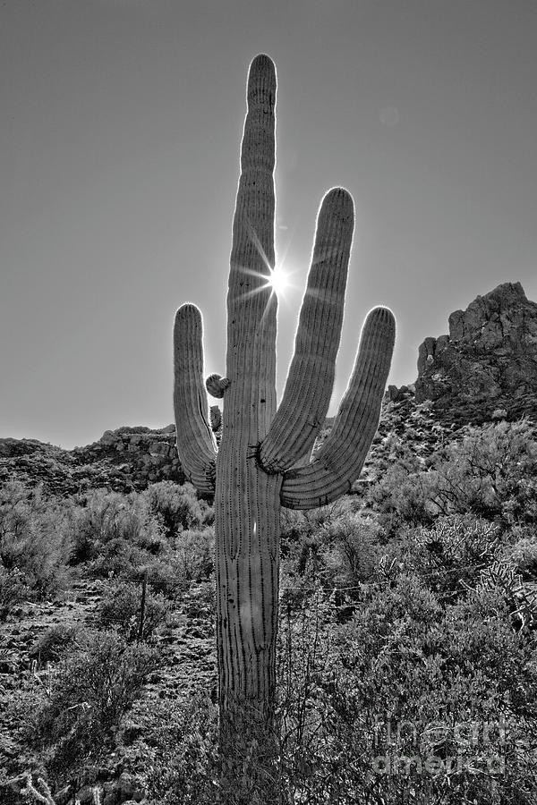 Desert Photograph - Saguaro In The Sun by James Jones