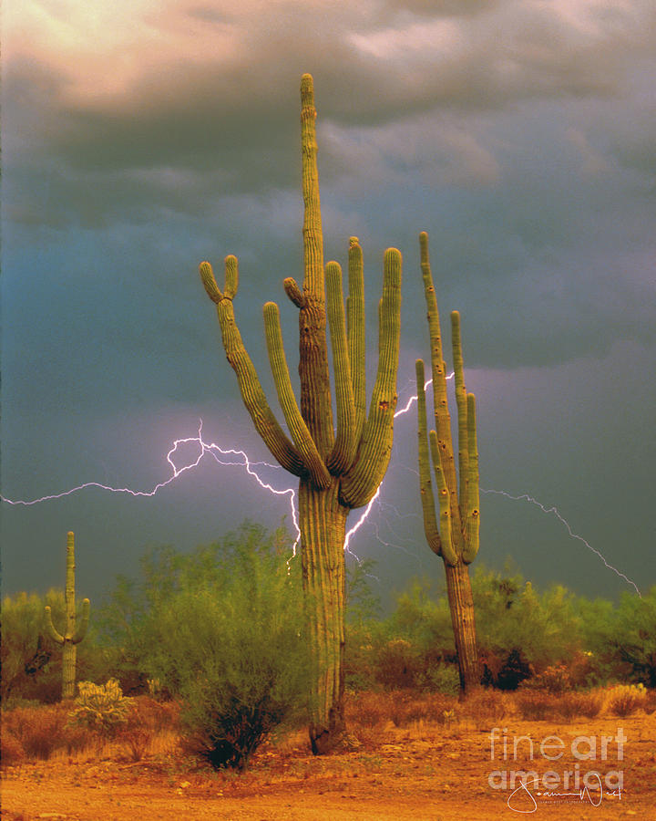 Saguaro Lightning Arizona by Joanne West
