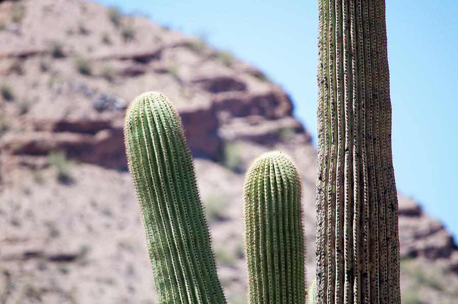 Saguaro Movie Nostalgia Photograph