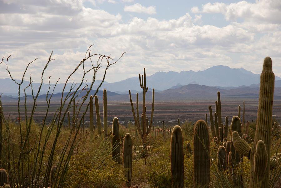 Saguaro Photograph - Saguaro National Park Az by Susanne Van Hulst
