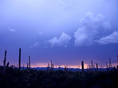 Sunset Photograph - Saguaro National Park by Audrey Kanekoa-Madrid