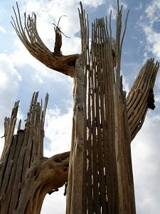 Saguaro Photograph - Saguaro Skeletons by Audrey Kanekoa-Madrid