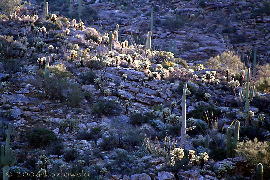 Cactus Photograph - Saguaro Sunrise by Joe Kozlowski