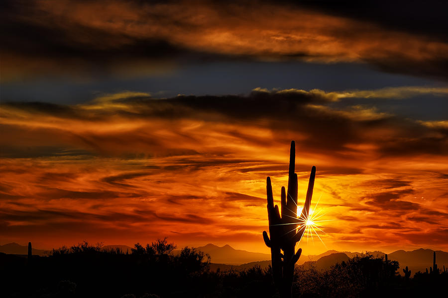 Saguaro Sunset H31 by Mark Myhaver