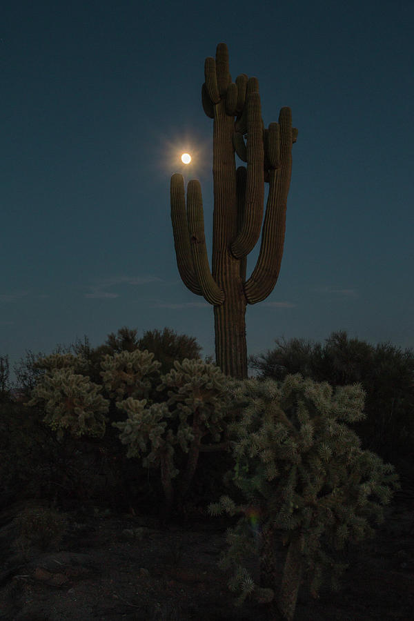 Saguaro Photograph - Saguro At Moonlight-img_1593-2016 by Rosemary Woods-Desert Rose Images