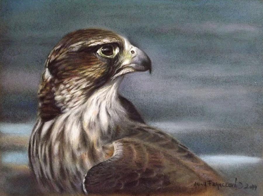Falconry Pastel - Saker Falcon by Anna Franceova
