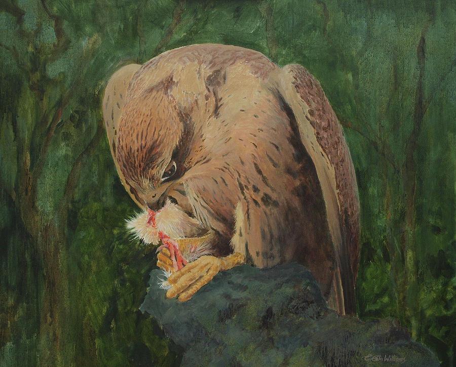 Saker Falcon Lunch by E Colin Williams ARCA