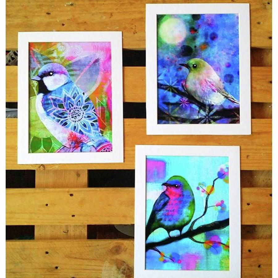 *sale* 3 11 X 14 In. Bird Prints With Photograph by Robin Mead