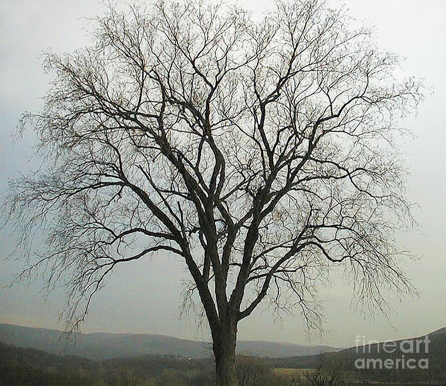 Tree Digital Art - Salisbury Tree by Alan Del Vecchio