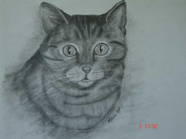 Cat Drawing - Sally Age Two by Maureen Blakeley