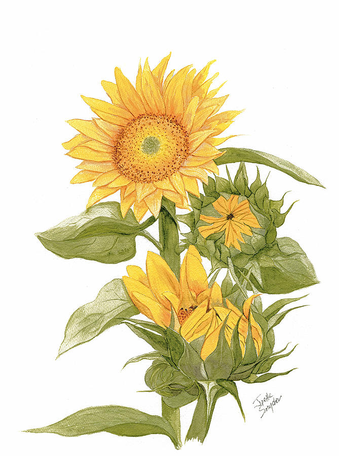 Sally's Sunflowers by Joette Snyder
