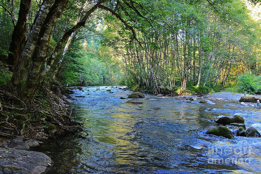 Tim Rice Photograph - Salmon Creek Majestic  by Tim Rice