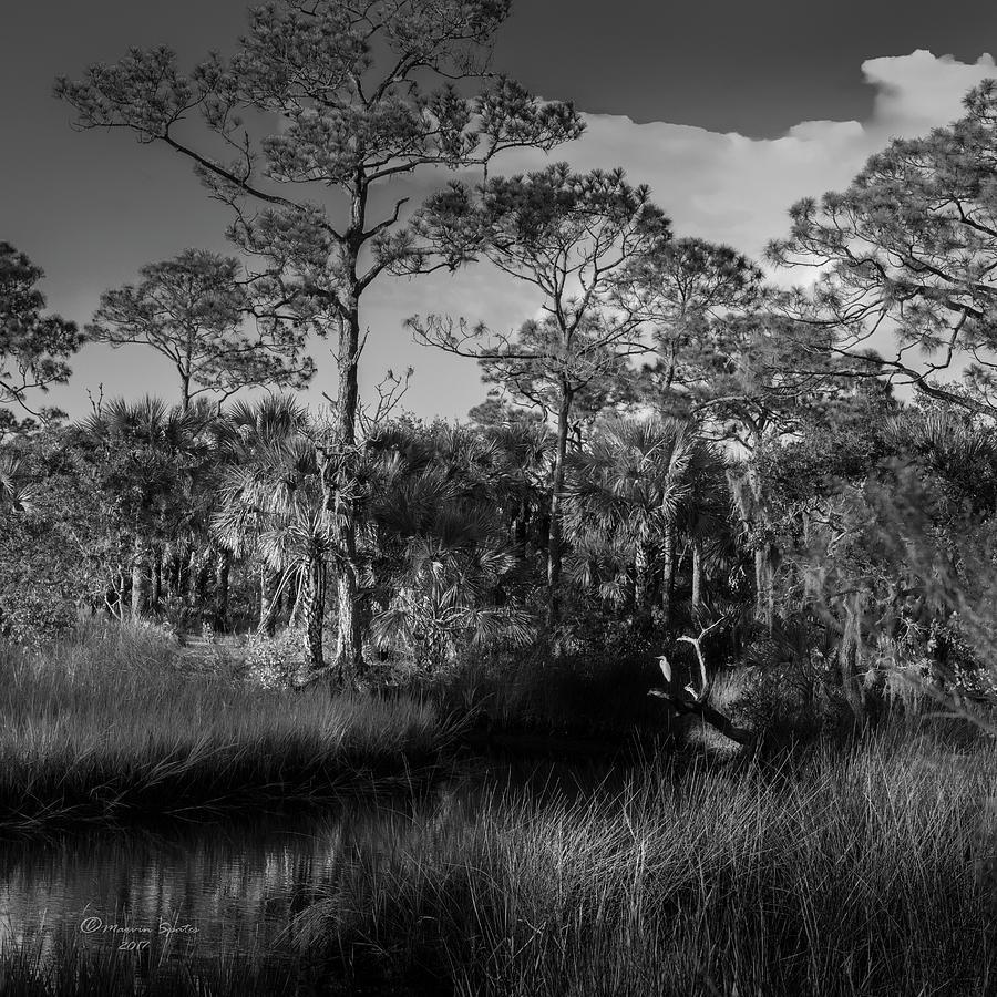 Swamp Photograph - Salt Springs by Marvin Spates