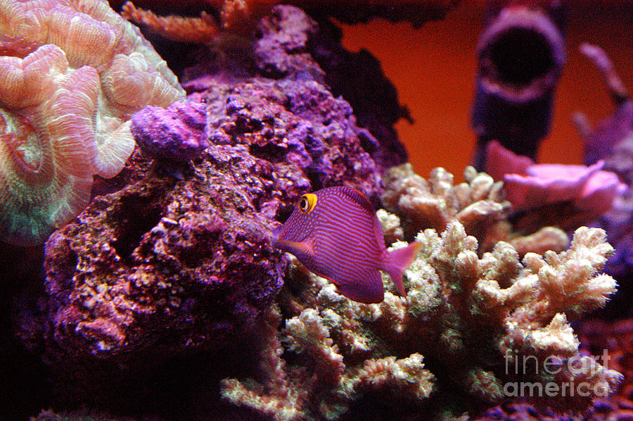 Clay Photograph - Salt Water  Aquarium by Clayton Bruster