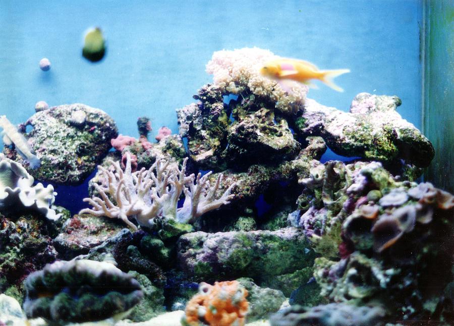 Salt Water Reef Tank Photograph - Salt Water Reef  by Steve  Heit