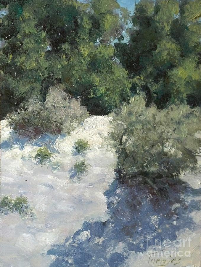 Saltbush and Tamarisk Windbreak by James H Toenjes