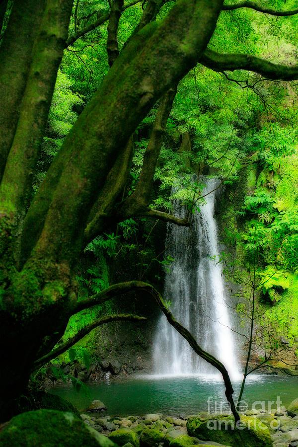 Environment Photograph - Salto Do Prego Waterfall by Gaspar Avila