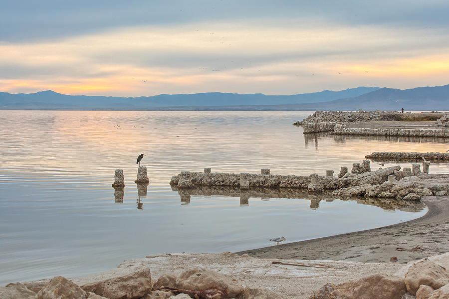 Salton Sea by Peter Dyke