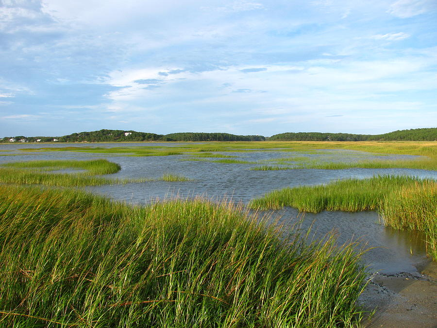 Saltwater Marsh Photograph By Tammy Bullard