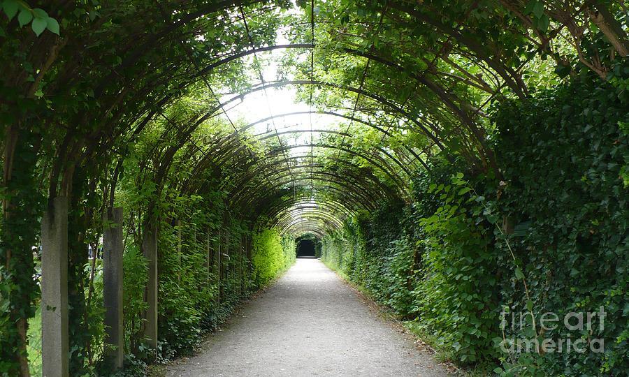 Europe Photograph   Salzburg Garden Arbor By Carol Groenen