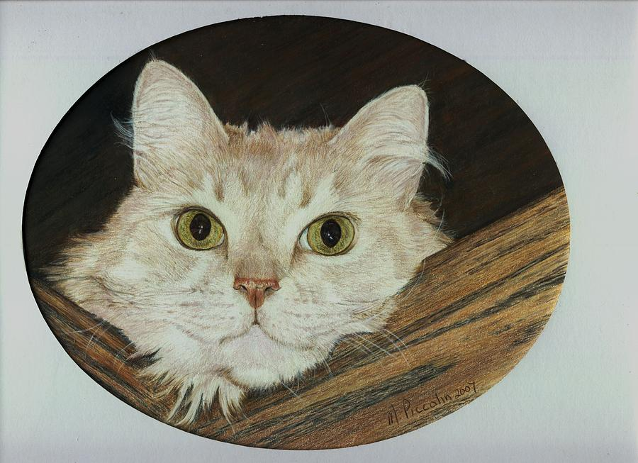 Cat Drawing - Sam by Marlene Piccolin