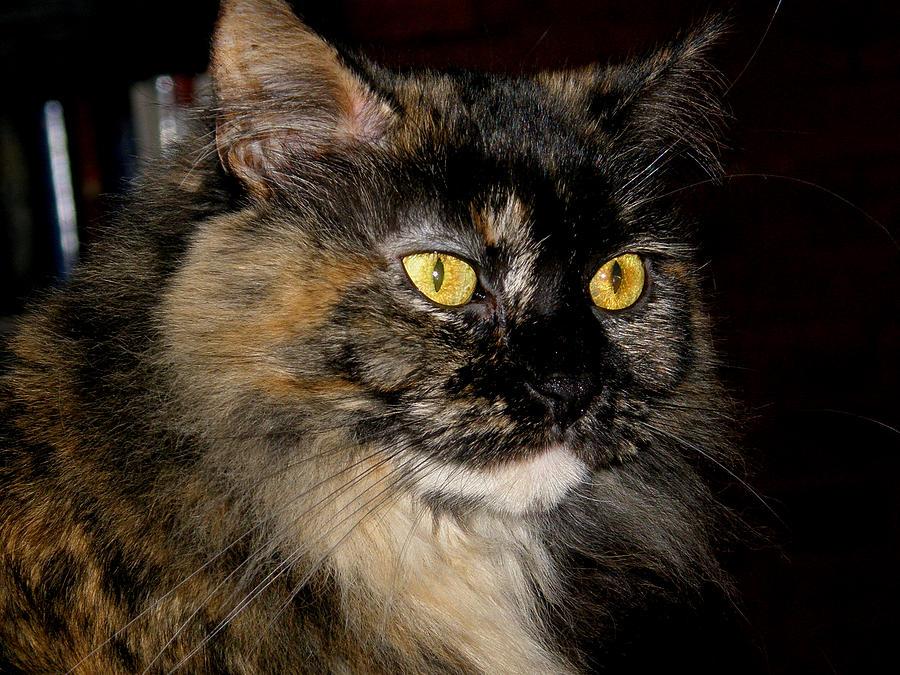 Kitty Photograph - Samantha by Martin Morehead