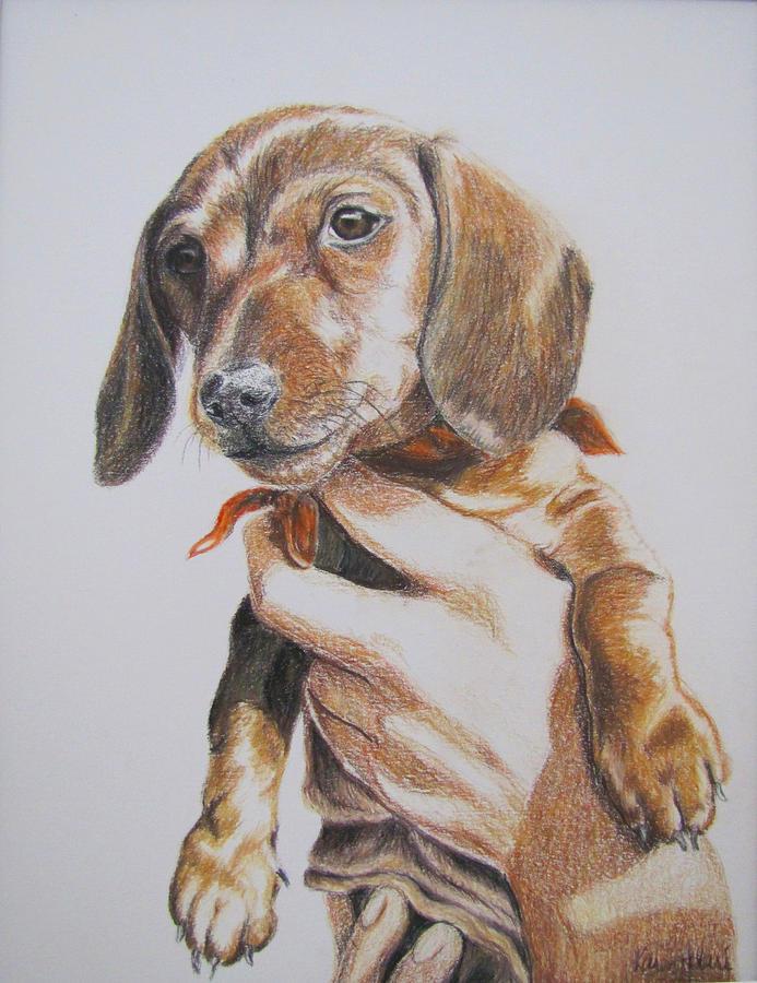 Puppy Drawing - Sambo by Karen Ilari