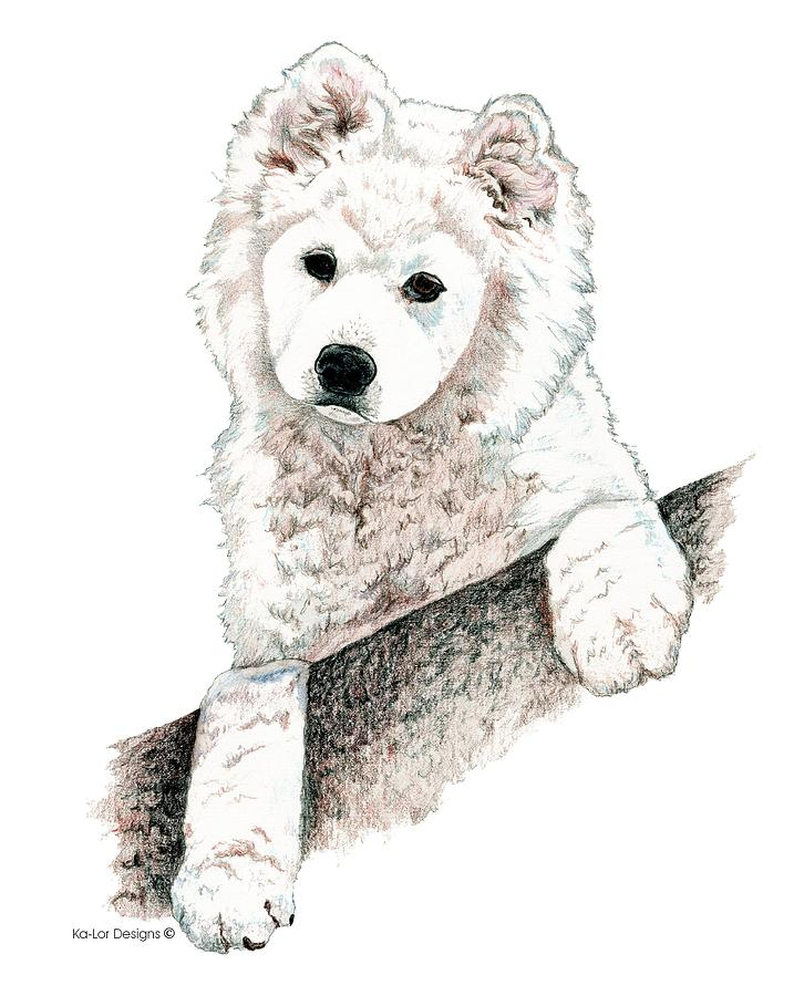 Samoyed Puppy Drawing By Kathleen Sepulveda