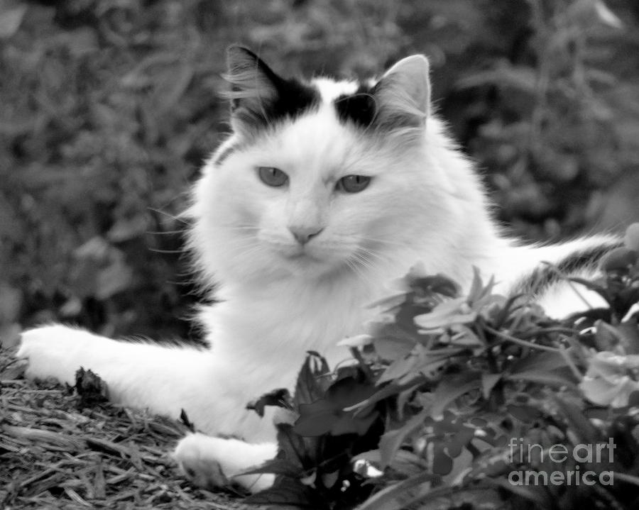 Cat Photograph - Sampson In Black And White by Jean Wright