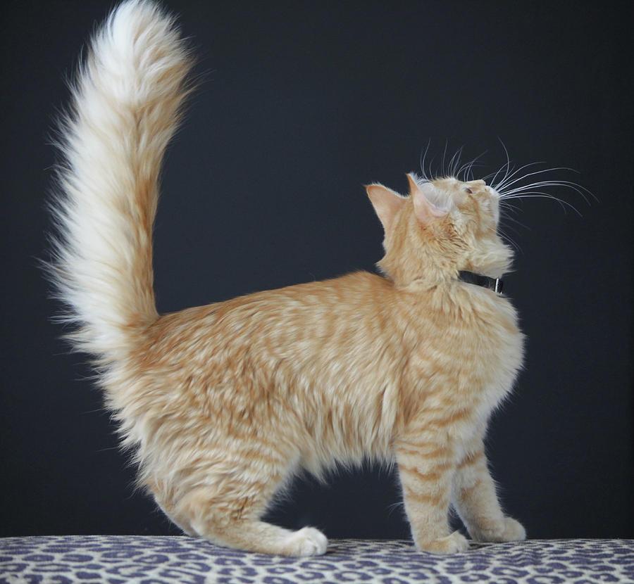 Cat Pastel - Samson_speaks by Ann Hoff