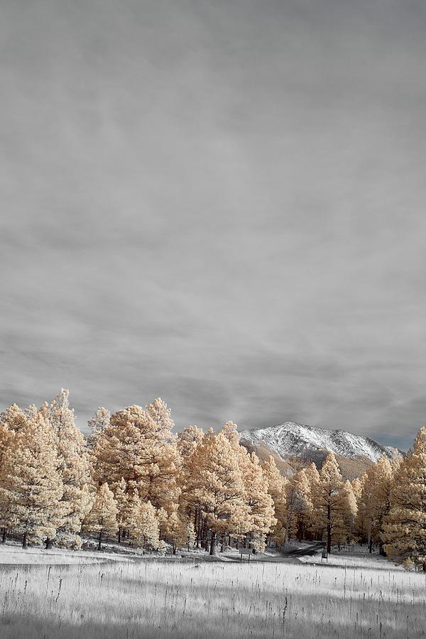 Jon Glaser Photograph - San Francisco Peak by Jon Glaser