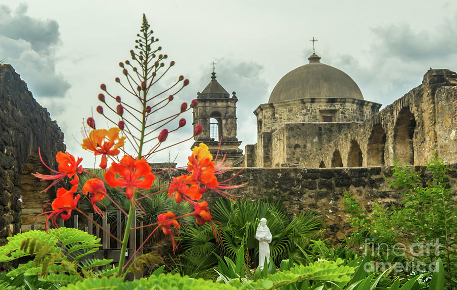 Mission San Jose With Pride Of Barbados Photograph