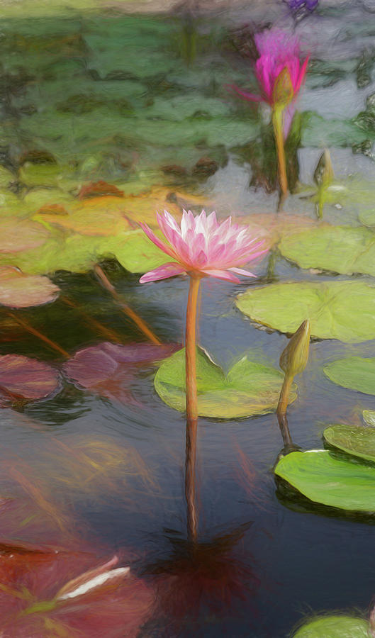 Mike Hope Photograph - San Juan Capistrano Water Lilies by Michael Hope