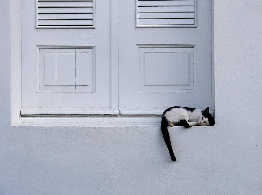 San Juan - Let Sleeping Cats Lie by Richard Reeve